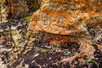 Point Reyes 5-24-15 - _25A3466